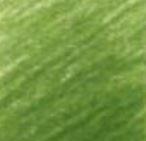 70 - N°167 Vert Olive